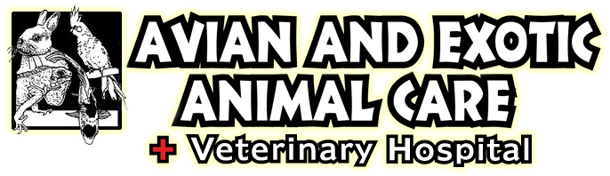 The Triangle's Only 100% Exotic Animal Hospital